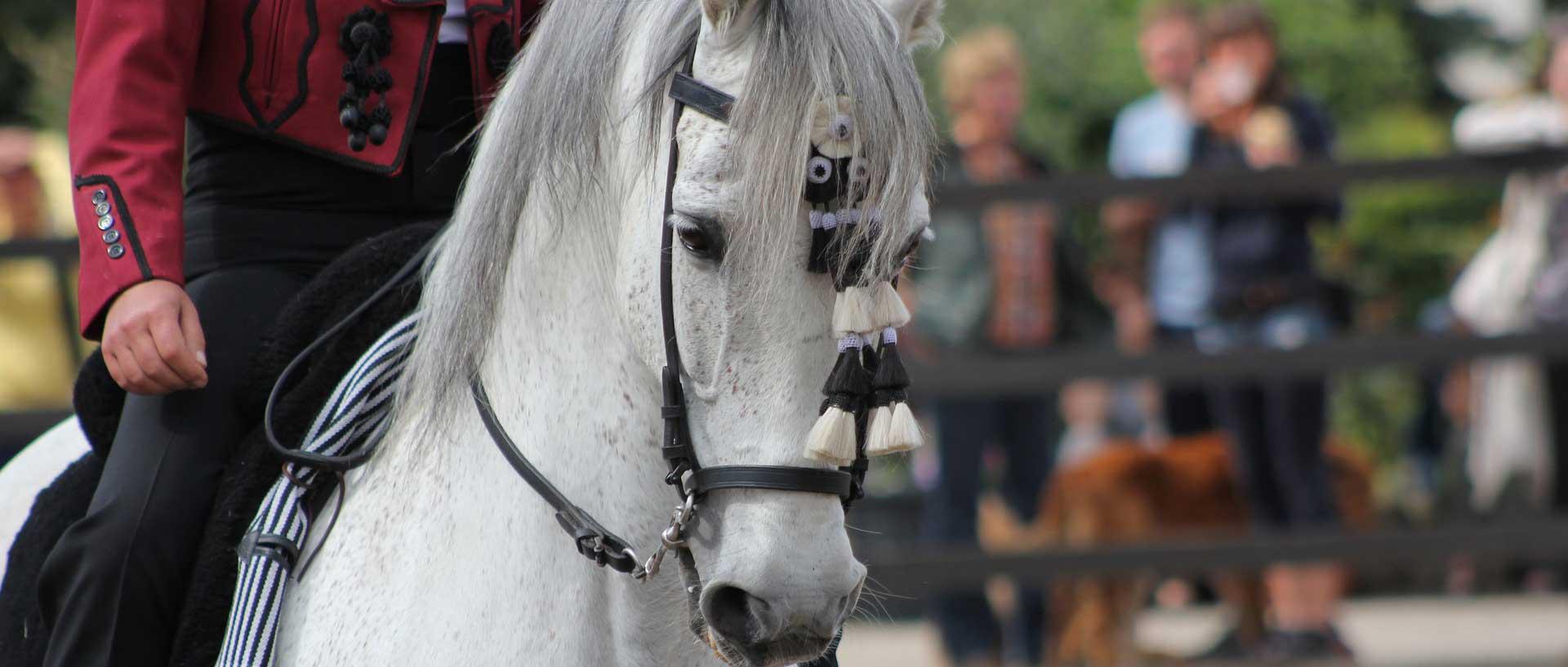 Alles rund um Ihr Pferd